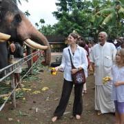 04_Den-Tempelelefanten-besuchen-Hier-werden-die-Elefanten-für-das-Tempelfest-geschmückt