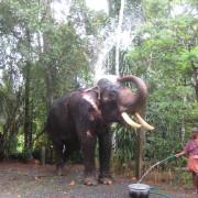 05_Der-Dorfelefant-Durga-Prasad-besucht-unsere-kleinen-Gäste-gerne