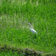 21_Im-BASIS-können-Sie-ausserdem-verschiedene-tropische-Vogelarten-beobachten