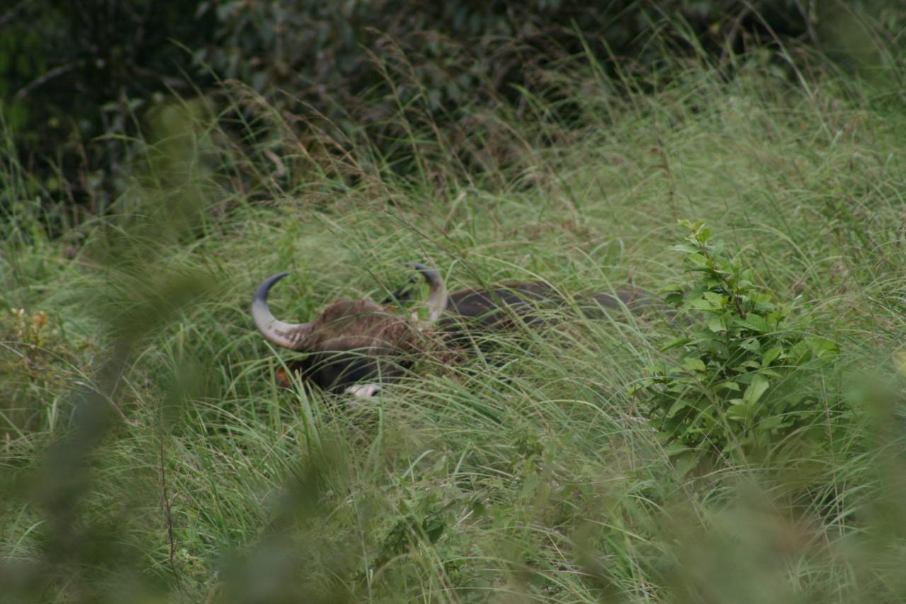 23_Wildtierbeaobachtung-bei-Wanderungen-in-Kumily-Südindien