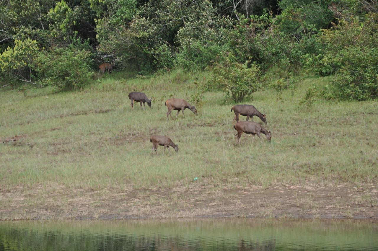 24_Wildtierbeobachtung-bei-Wanderungen-in-Kumily-Südindien