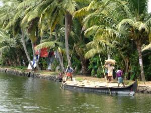 Reis-Ernte in Kerala, Indien
