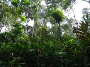 Kumily Gewürzplantag